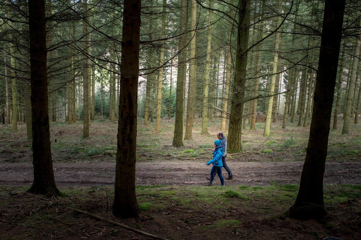 Walk-wood-Ardennes