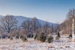 Ardennes - Winter - Snow (13).jpg