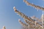 Ardennes - Winter - Snow (12).jpg