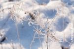 Ardennes - Winter - Snow (11).jpg