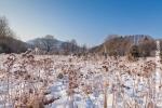 Ardennes - Winter - Snow (10).jpg