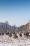Ardennes - Winter - Snow (9).jpg