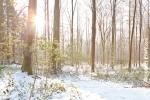 Ardennes - Winter - Snow (4).jpg
