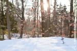 Ardennes - Winter - Snow (2).jpg