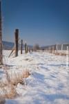 Ardennes - Winter - Snow (25).jpg