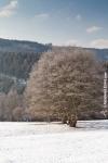 Ardennes - Winter - Snow (23).jpg