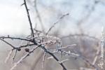 Ardennes - Winter - Snow (19).jpg